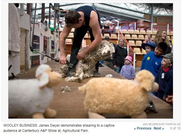 坎特伯雷农场秀开幕:爱上小动物 孩子欢心萌动